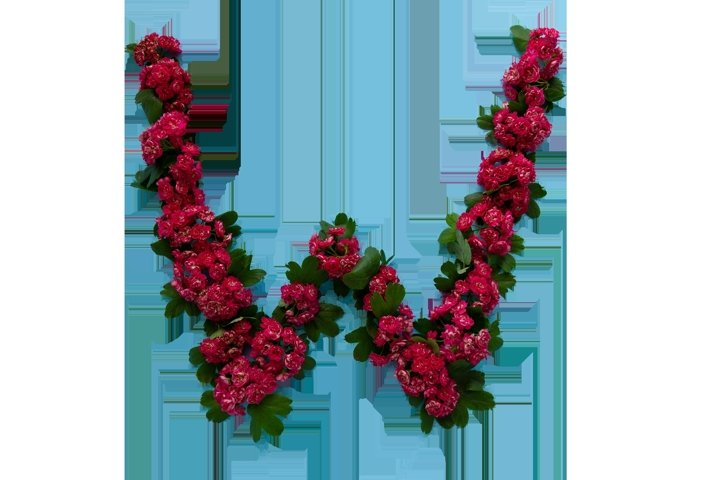 The letters are composed of rosehip flowers.
