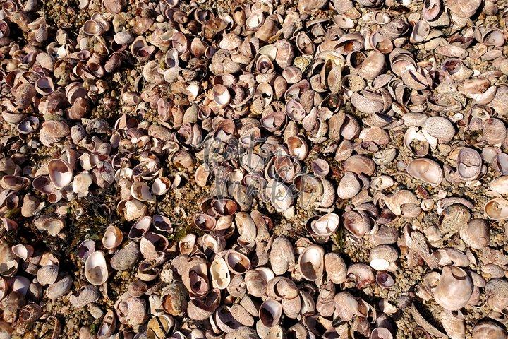 Stock Photo - Washed Up Shells