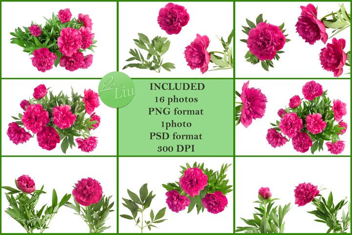 Bouquet on pink peonies on transparent background