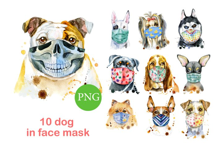 Dogs in face mask