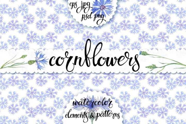 Cornflowers. Watercolor set.