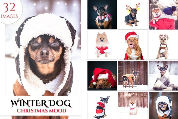 Winter Dog, Christmas Mood Set 32ipg