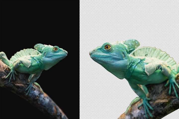 Exotic Reptile on Black Background