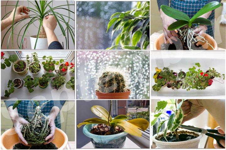 Collage of 9 houseplant photos