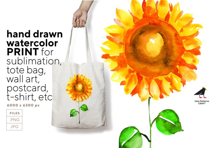 Sunflower with leaves watercolor for print and sublimation