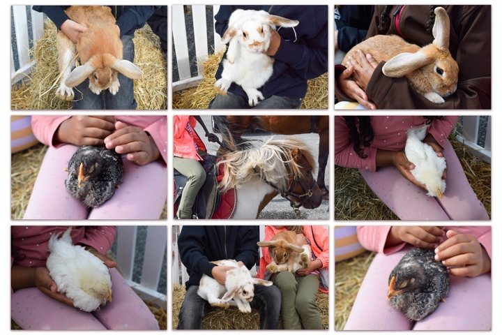 Set of 9 images. Child and small farm animals