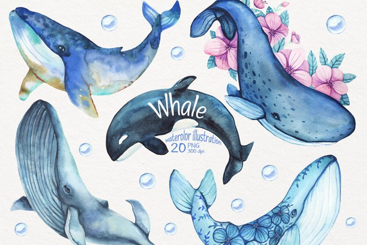 Whale Watercolor collection.
