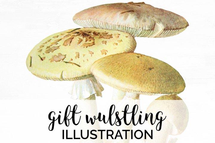 Mushroom Clipart Vintage