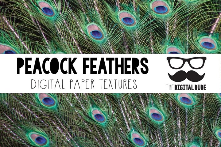 Peacock Feathers - Digital Paper Set - 12 Images