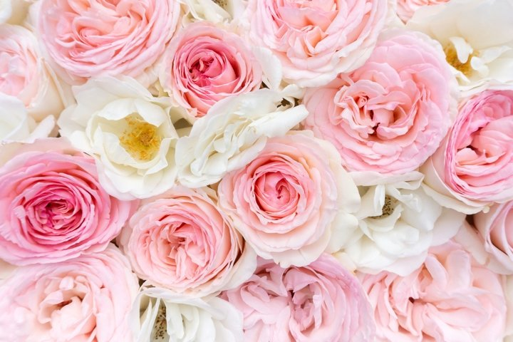 Delicate pink roses background for wedding occasions