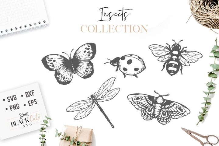 Insects Bundle svg