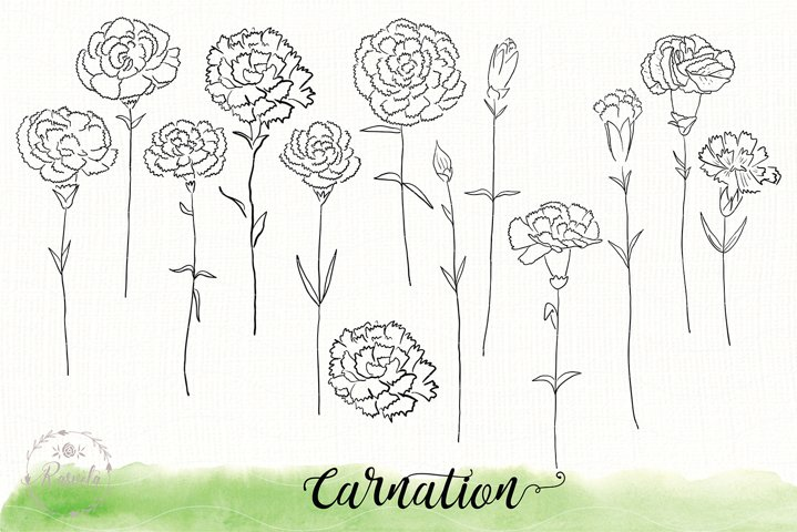 Carnation flower sketch drawin