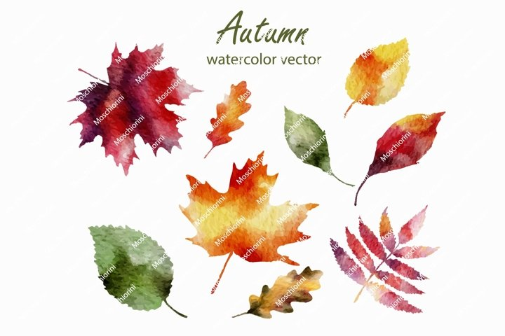 EPS set of fall autumnt leaves in watercolor