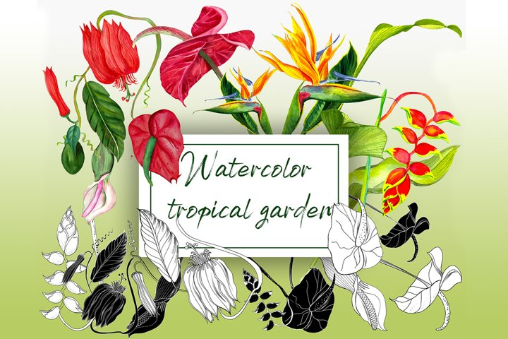 Watercolor tropical flowers PNG