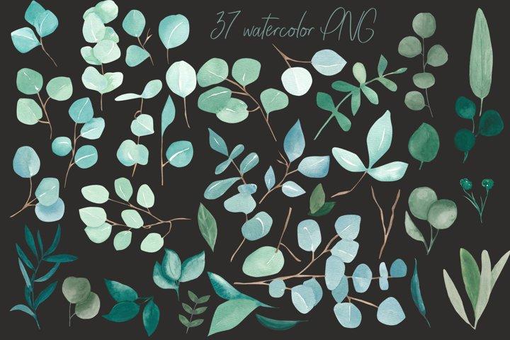 Eucalyptus bundle, watercolor eucalyptus clipart example 1
