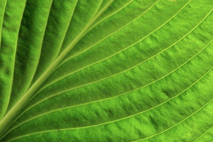 Close up green leaf spring background