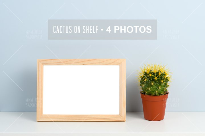 Bundle of 4 photos - cactus in pot on shelf