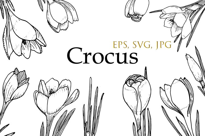 Crocus and leaves SVG. Hand drawn doodle flowers.Vector