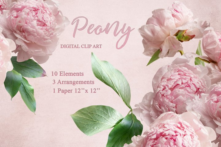 Pink peony clipart. Bouquets of peonies.