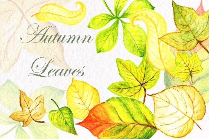Autumn leaves clipart autumn leaf illustration wedding