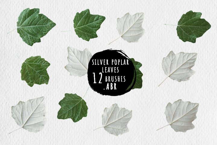 Silver poplar leaves brushes for Photoshop, ProCreate .ABR