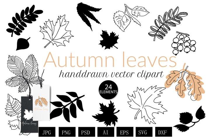 Autumn leaf svg botanical lineart and black svg bundle