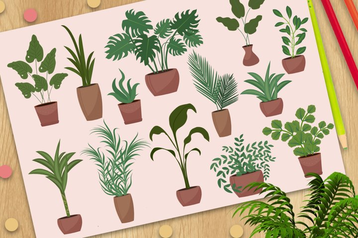 Big set of potted plants