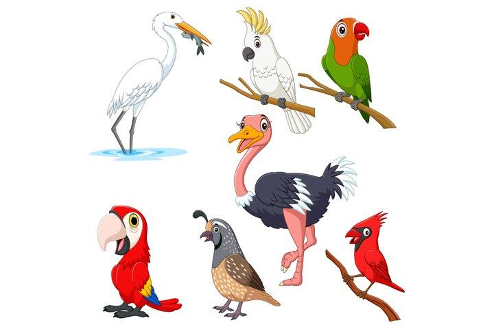 Set of Seven Cartoon Birds Character