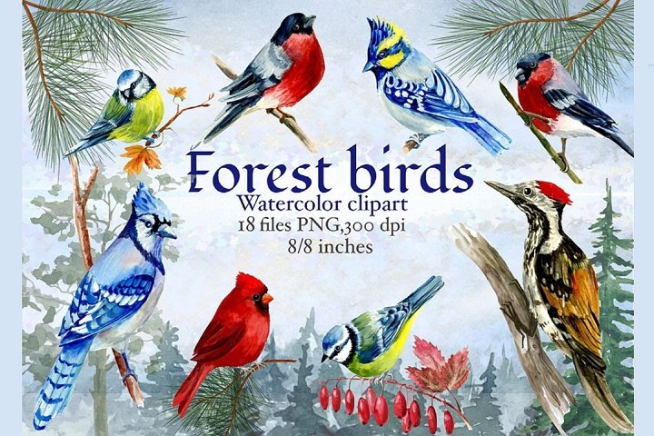 Forest birds watercolor clipart, Red cardinal.