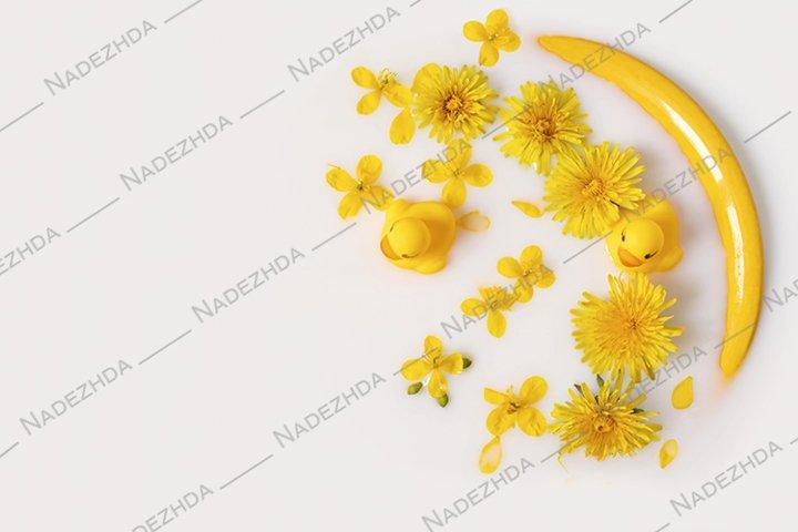 Dandelions and toy ducklings in milk