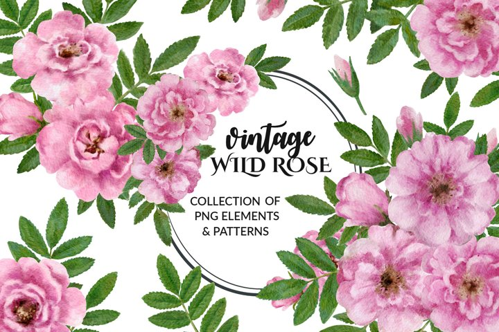 Vintage wild rose collection
