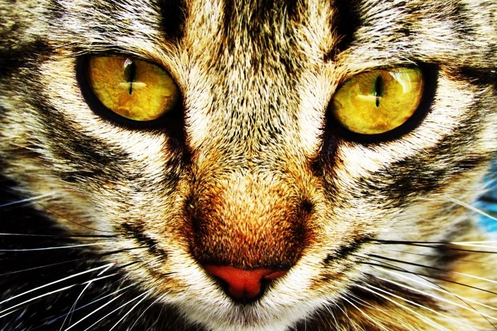The expressive look of a domestic cat