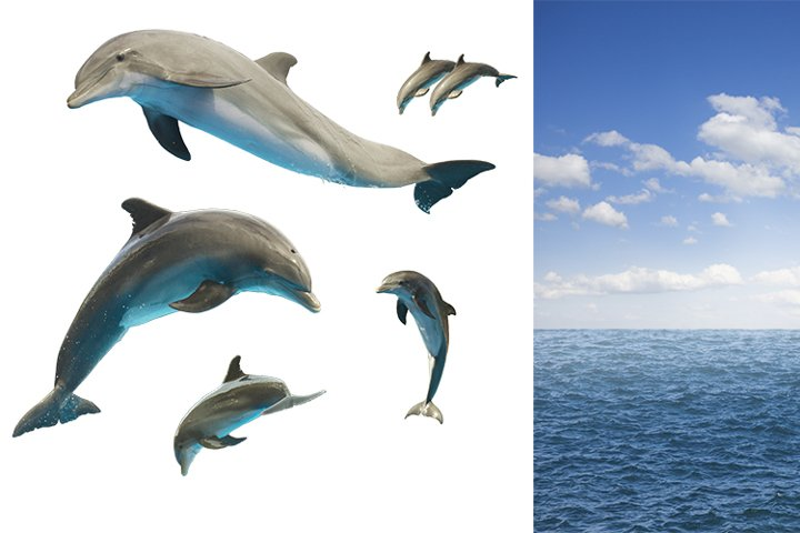 Set of jumping dolphins and sea