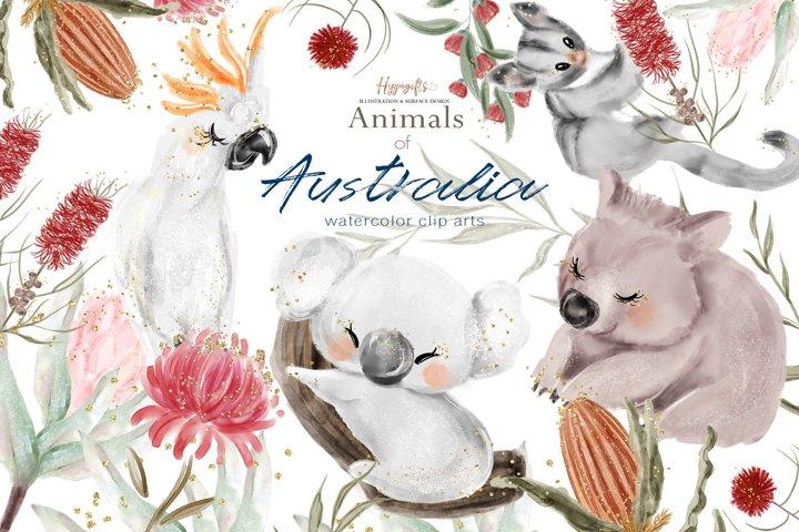 Watercolor Australian animals illustration