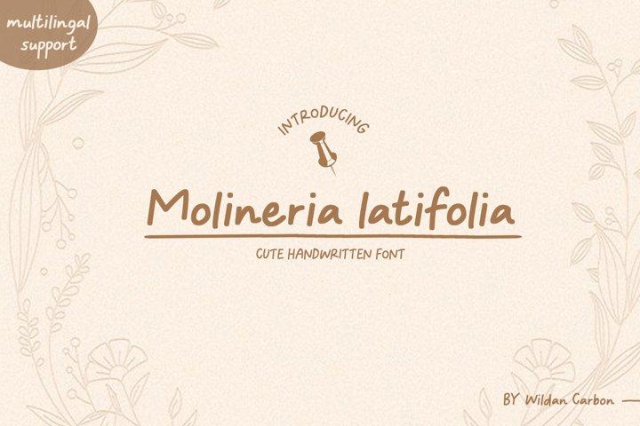 Molineria Latifolia
