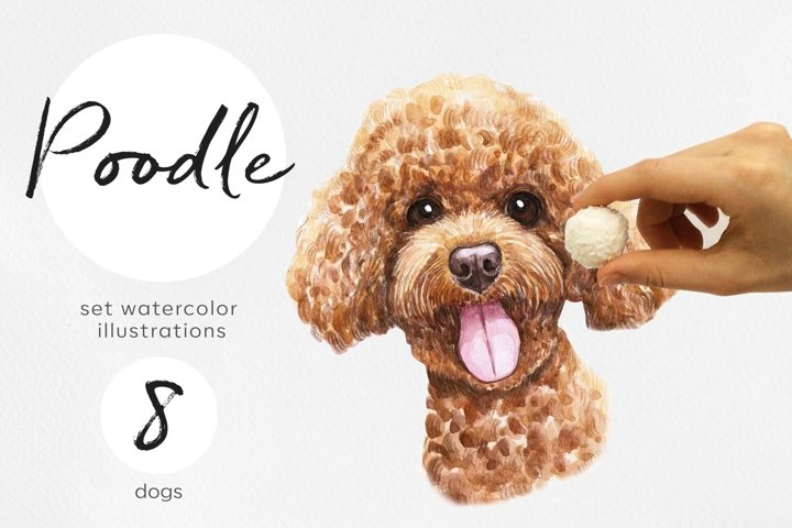 Poodle. Watercolor dog illustrations. Cute 8 dog