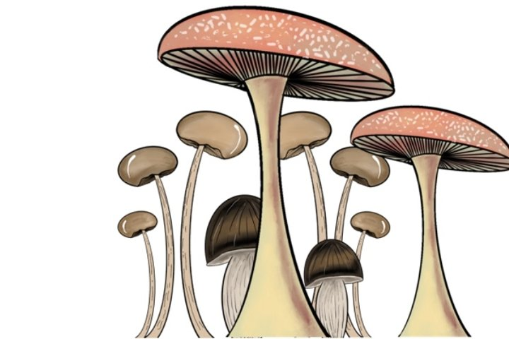 Toadstools | Mushrooms PNG