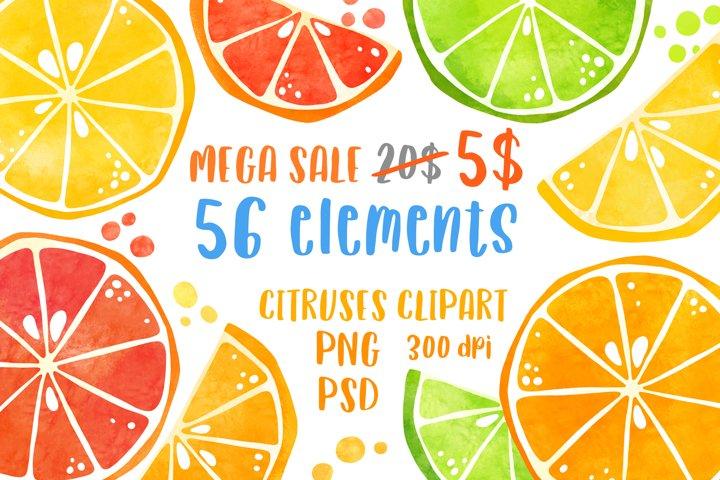 Watercolor citrus clipart bundle Summer fruit clip art PNG