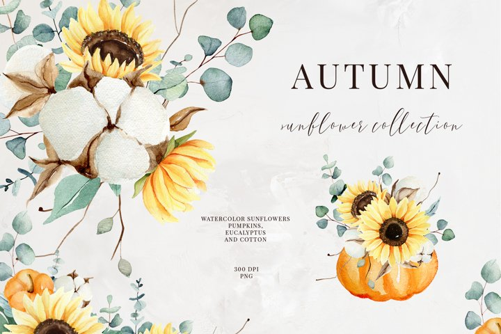 Autumn Delicate sunflower clipart