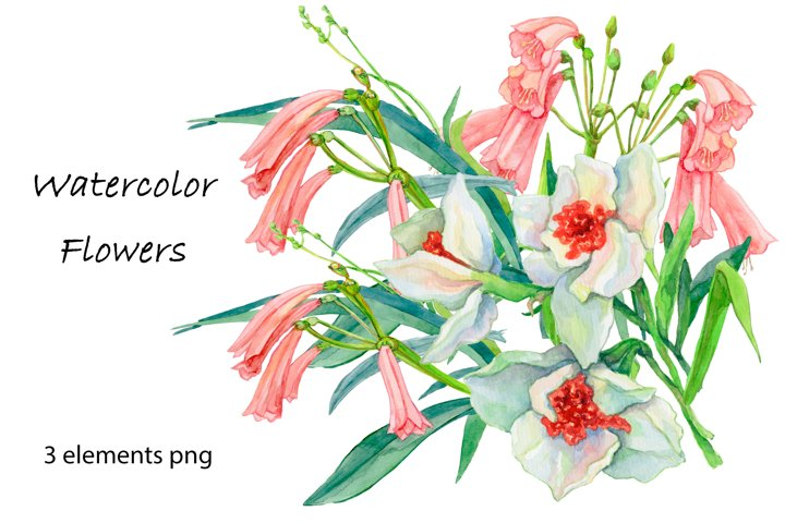 Flowers watercolor clipart collection