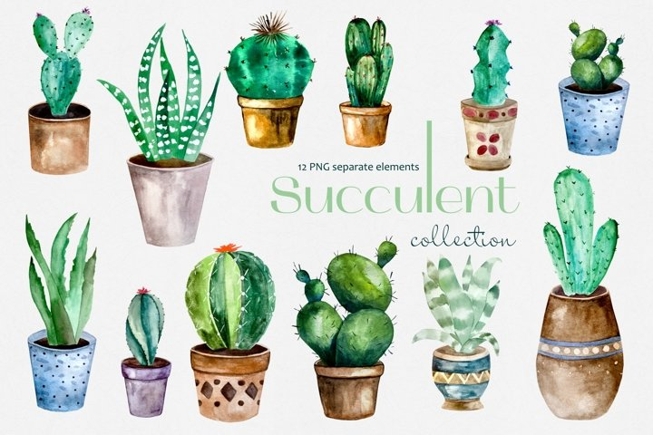 Watercolor Succulent and Cactuses in Pots