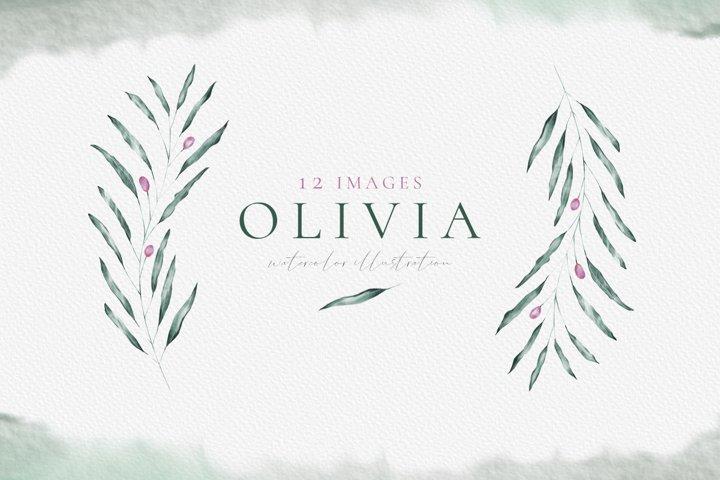 Olivia - Olive leaves watercolor & line art
