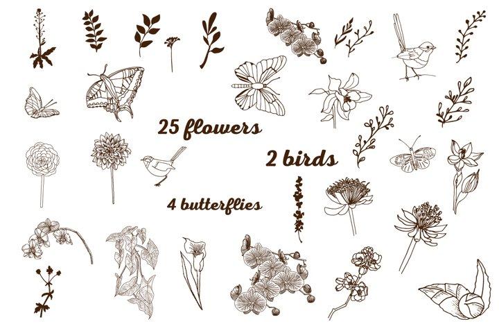 25 Graphic flowers, 2 birds, 4 butterflies .Vector