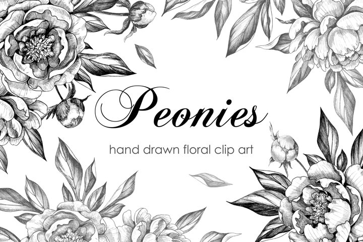 Hand Drawn Peonies