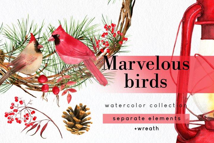 Watercolor Christmas cardinal winter birds clipart