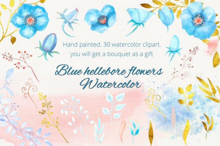 Blue hellebore flowers. Watercolor