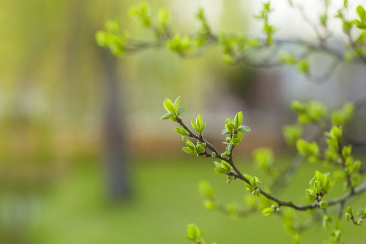 The first spring leaves and buds on a green background