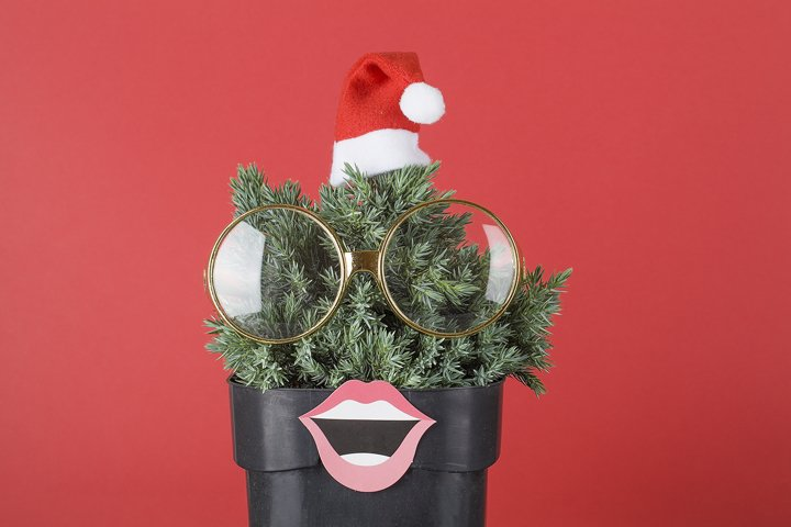 green juniper with santas hat , glasses and lips on red