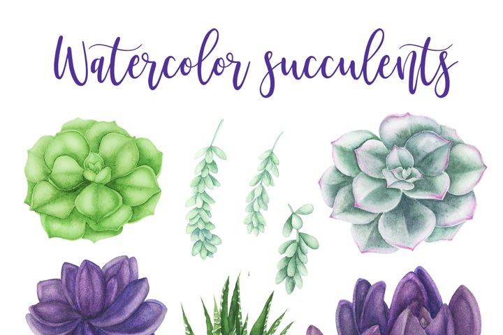 Succulents Bundle example 1