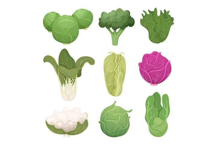 Cabbage pictures. Farm vegetarian ingredients eco diets gree